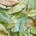 Varieties of Bay Leaf