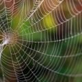 Scientists Create a Graphene Spider Web, Capable of Tangling an Airplane